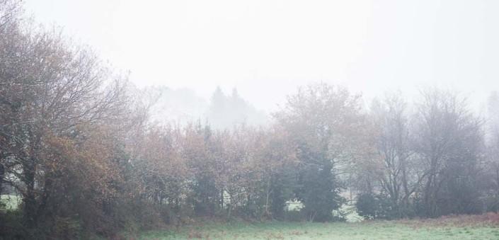 paisaje neblina