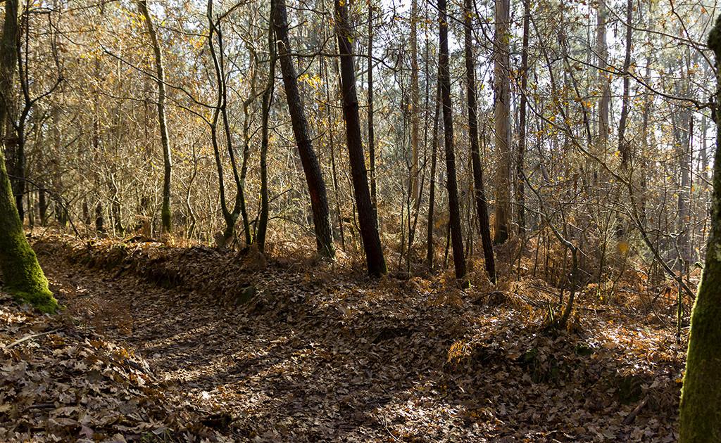 paisaje en otoño