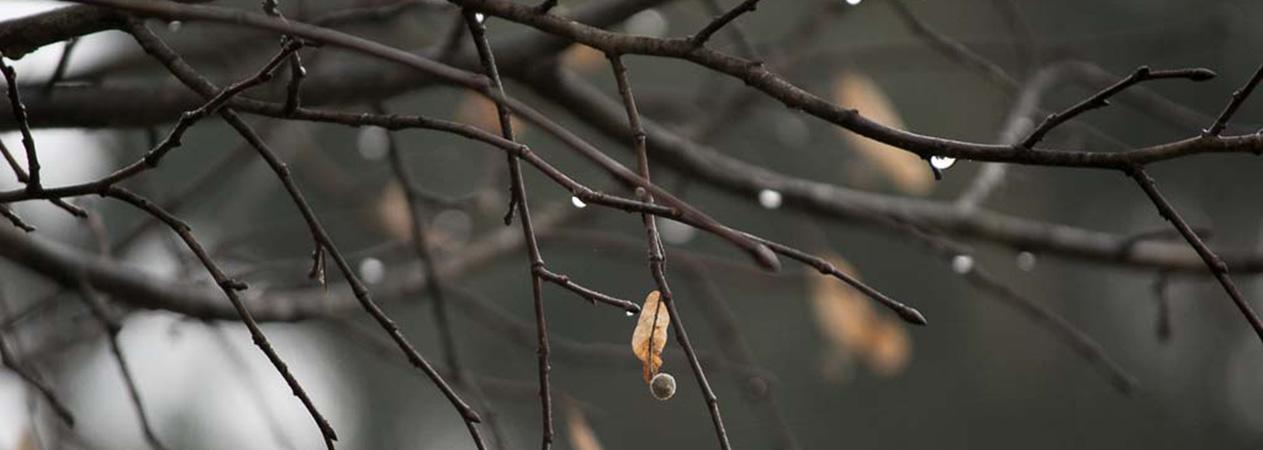 ramas mojadas